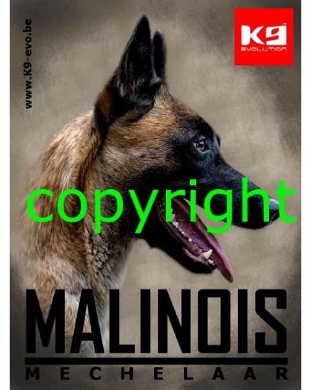 K9-evo® Malinois-Mechelaar Sticker