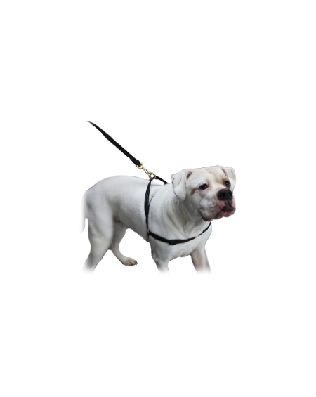 MAZTER no pull harness BULL